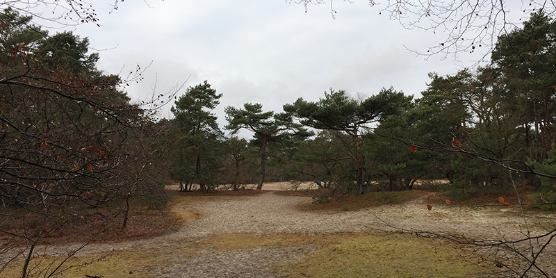 sand dune forest
